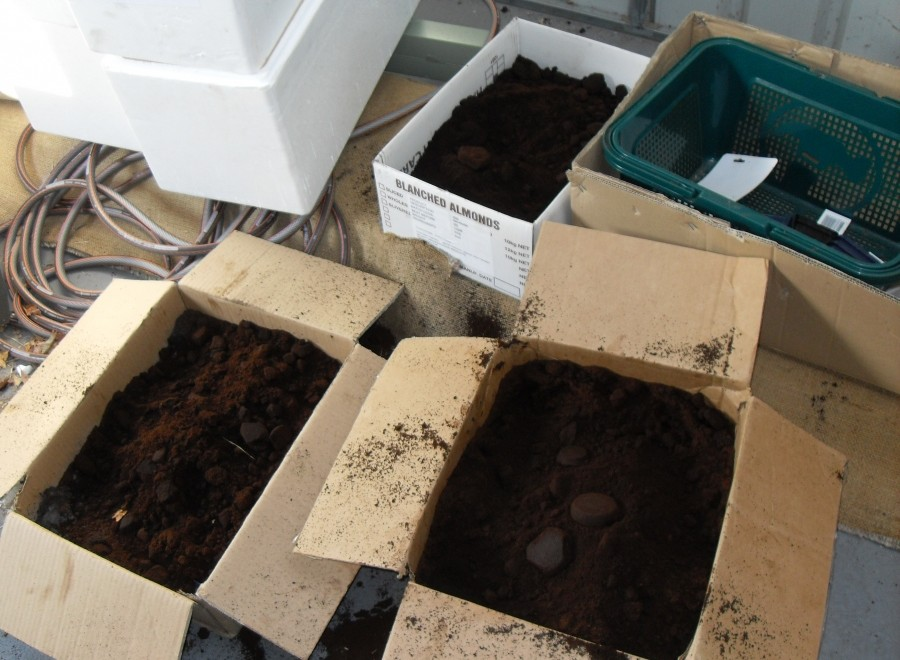 Ground_coffee_in_boxes